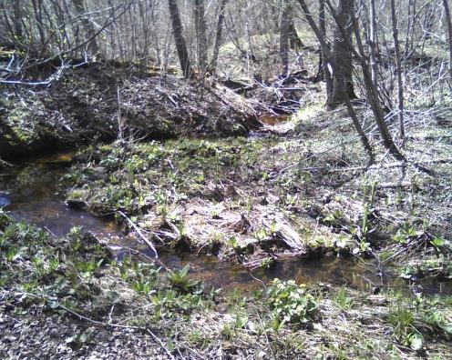 Bend in our seasonal creek
