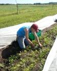 Cutting greens mix