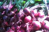 beets -- from transplants