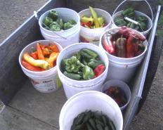 Cart o Peppers