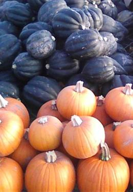 Acorn Squash and Pie Punkins