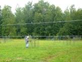 Elden pruning apple trees