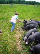 Franklin and pigs