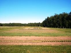 Middle field & west field