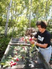 Jean bunching radishes