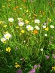 WildflowersE