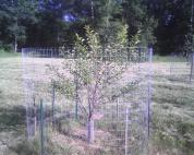 sourcherrytree