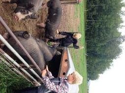 Pig Visit Buck Boys