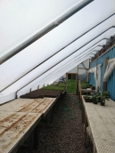 Greenhouse after