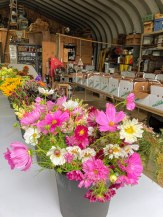 Beauty and utility; flowers ready for arrangement; veggie CSA boxes ready to be packed.